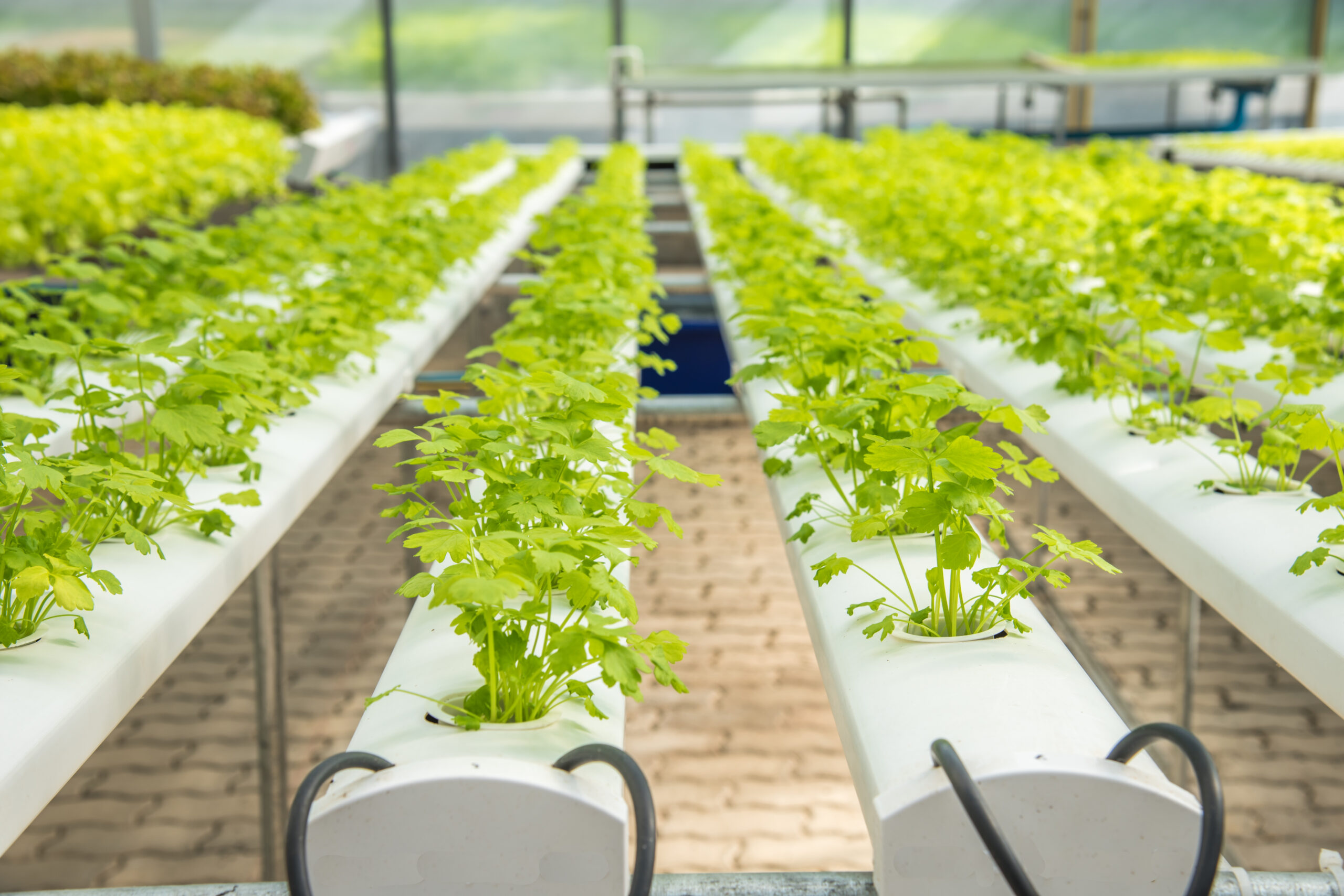 Growing without soil – An overview of hydroponics