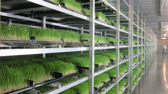 Producing fodder crops using hydroponics