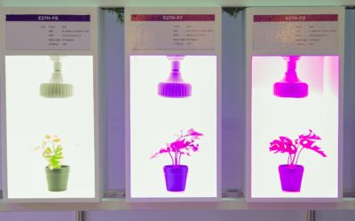 The influence of different light wavelengths on plant growth